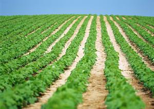 農地に関する相談 | 栃木県農業...
